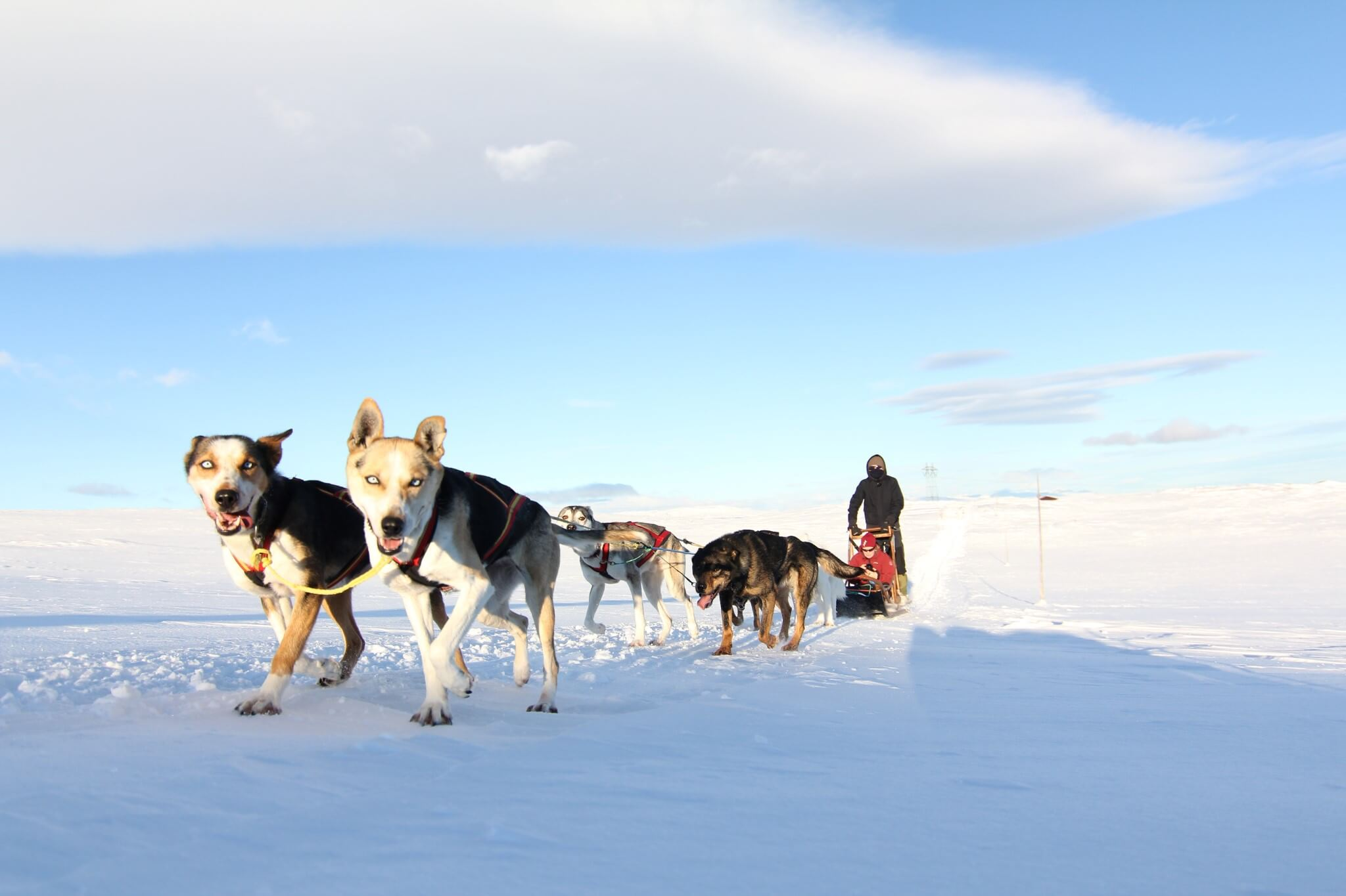 Hundespann på Hardangervidda/Geilo