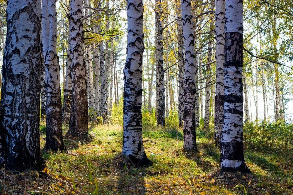 Dra til fjells i pollensesongen – Vårtilbud på lengre opphold